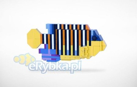 Lego Regal Angelfish