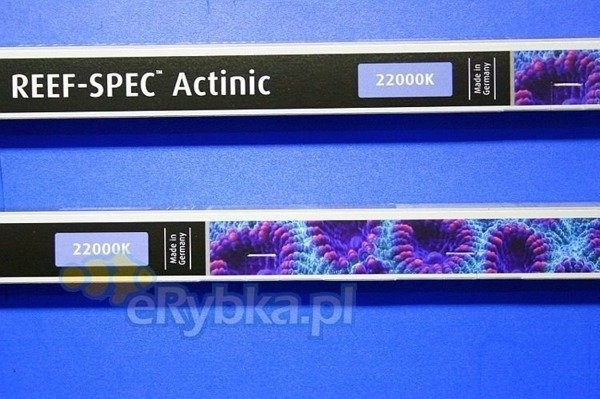 Red Sea Reef-Spec Actinic 24 W